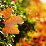 1392233_autumn_leaf